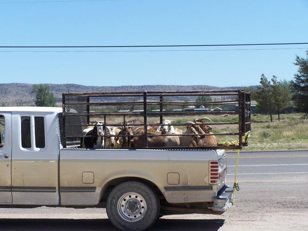 Big Bend, motorcycle, ride, Alpine