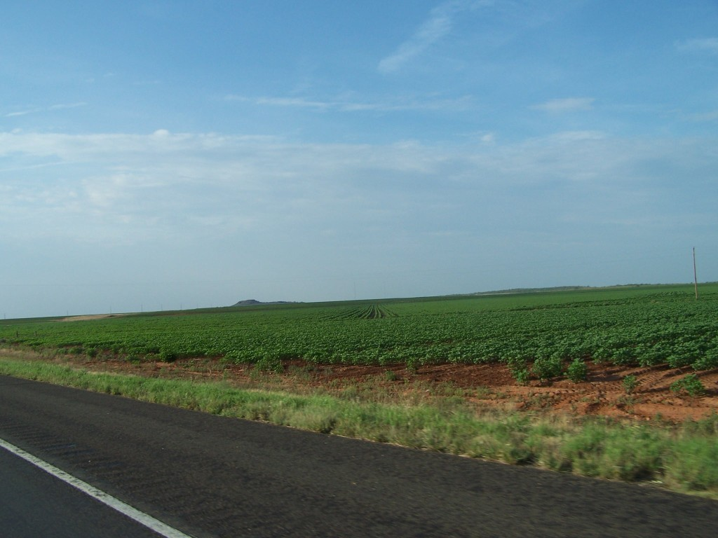 We grow a lot of cotton here in Texas