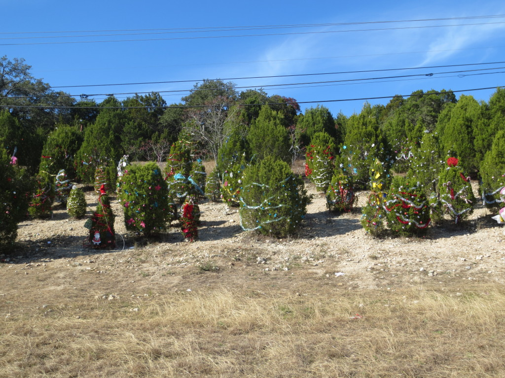 Austin, Texas new tradition... Roadside Christmas Trees