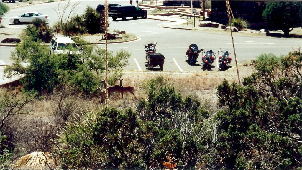 Deer at Chisos Basin Lodge