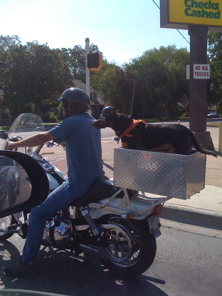 Dogs who ride motorcycles, motorcycle touring, motorcycle travel, motorcycle ride, motorcycle trip, motorcycle riding, motorcycle road trips, Travel